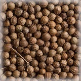 CORIANDER SEEDS (WHOLE) ORGANIC